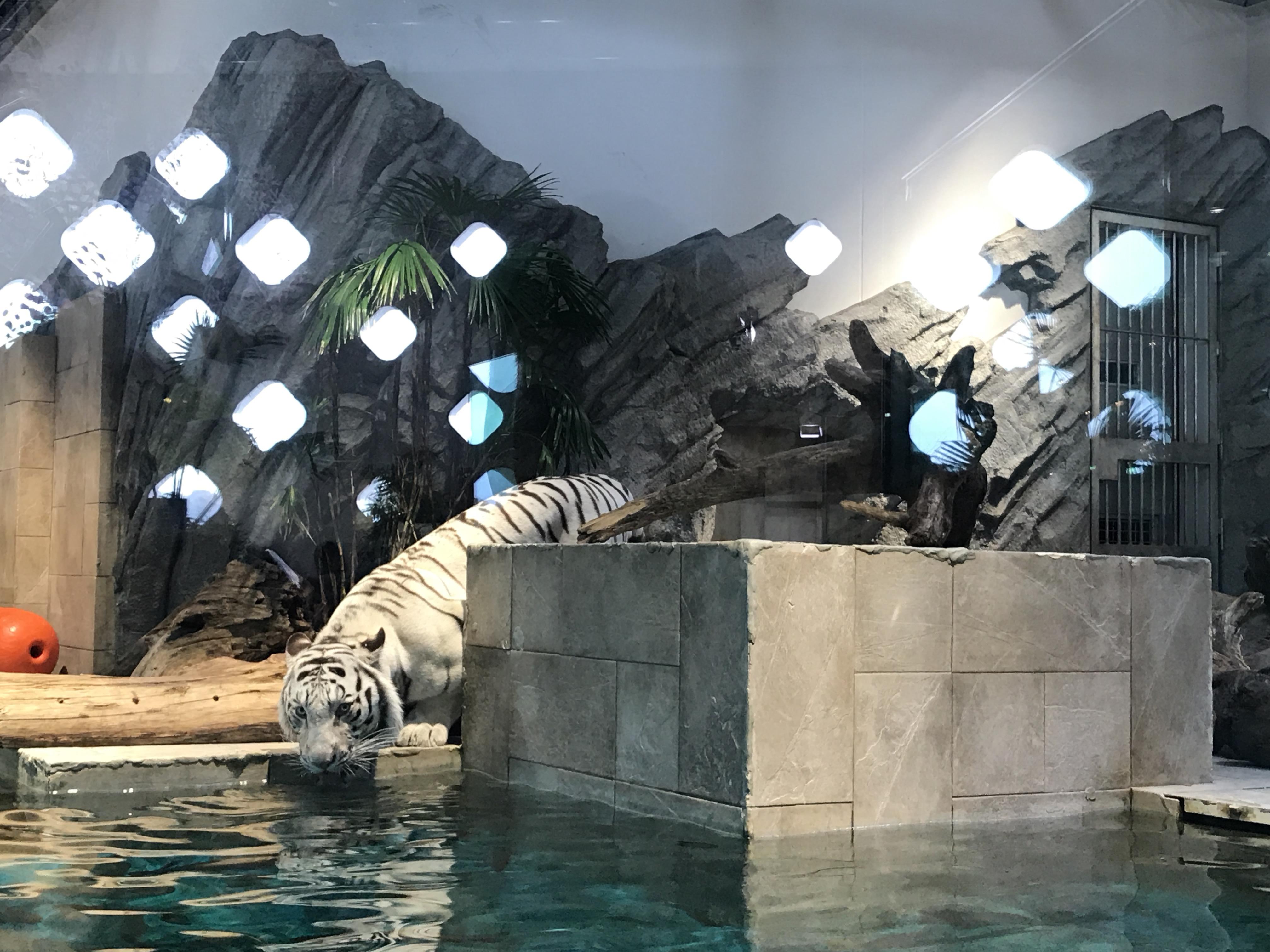 ニフレル(NIFREL) 大阪 吹田市 水族館 動物園 おすすめ情報や混雑状況